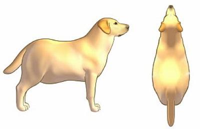 Si tu perro se ve así desde arriba, ¡podría dejarte PRONTO!