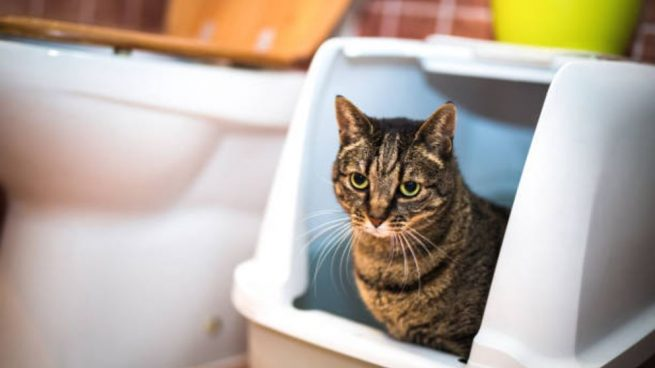 Cómo eliminar el olor a orín de gato en casa de forma fácil paso a paso
