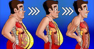 7 Alimentos que deberías comer con regularidad para quemar la grasa del vientre