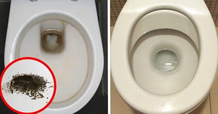 Consejos para eliminar el moho negro del váter sin esfuerzo